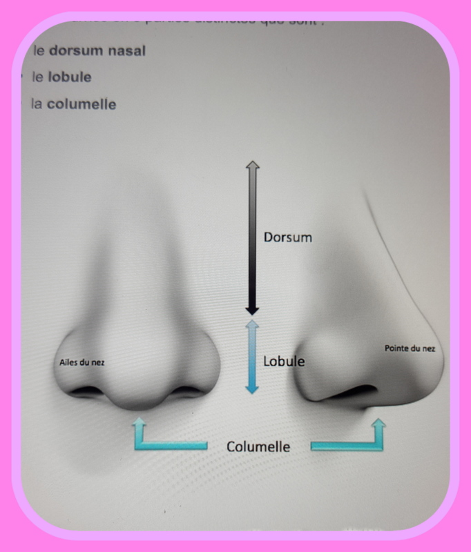 rhinoplastie topographie du nez